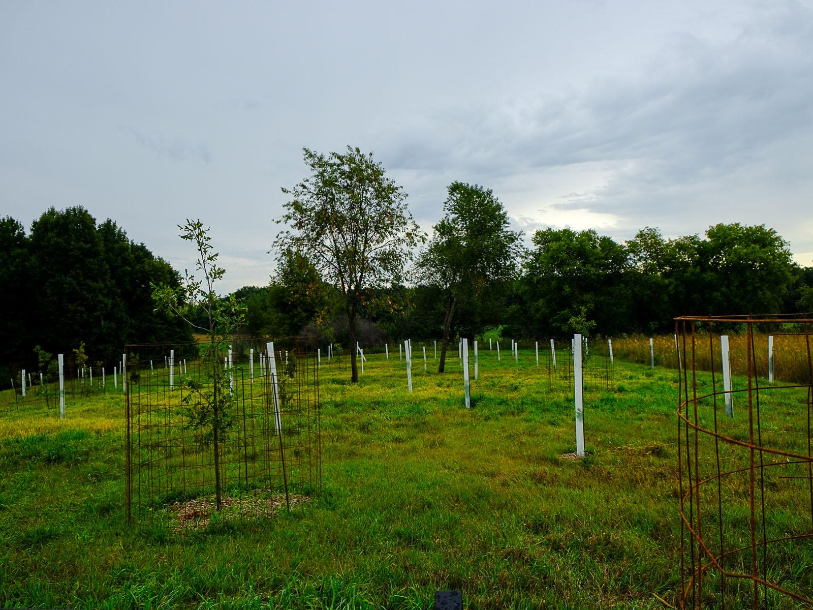 <div class='slider_caption'>                                                      <h1>Trees of the Arboretum</h1>                                                      <a class='slider-readmore' href=''>                                                                                                           </a>                                                      </div>